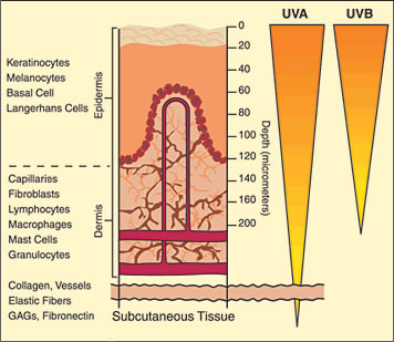 UV penetration depth