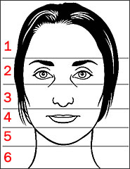 zones of the face