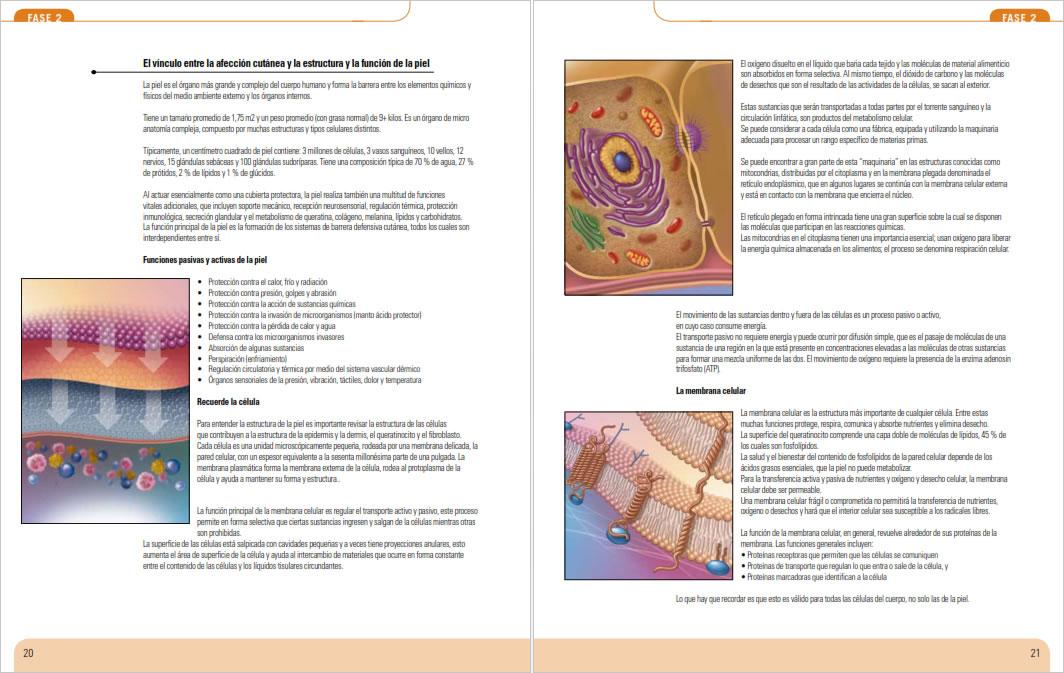 Análisis Avanzado de la Piel- muestra-7