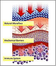 Skin barriers